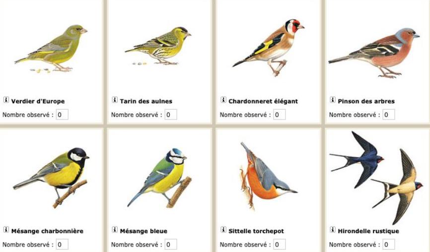 Surf'in Nature: Les oiseaux du jardin